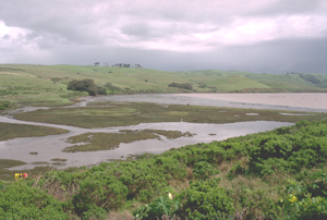 Mudflats in Tomales Bay