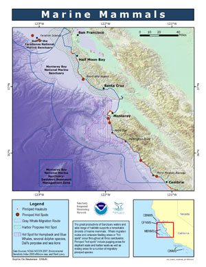 Marine Mammals_ map