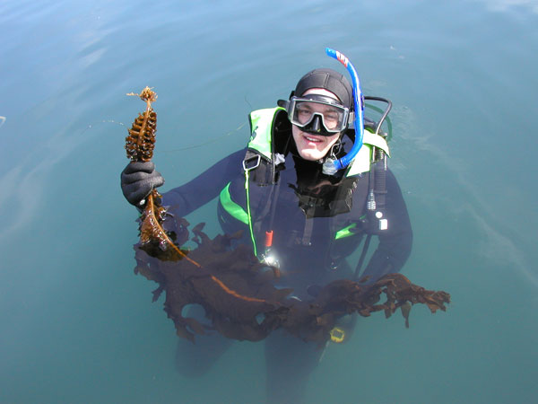 Management program for the invasive kelp <em>Undaria pinnatifida</em>