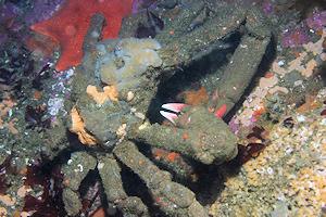 Masking crab image