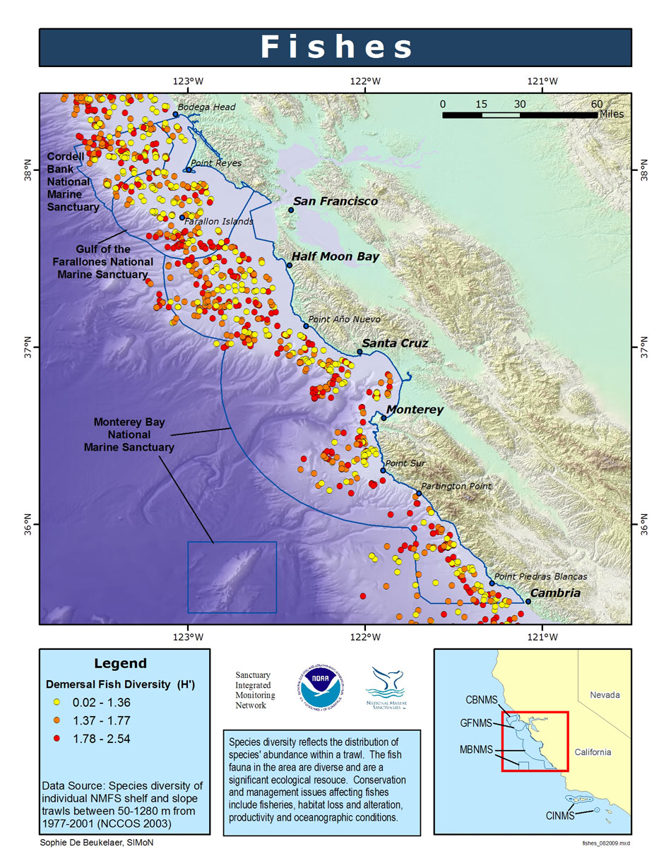 the diversity and thriving marine life in the monterey bay marine sanctuary Live from monterey bay, it's your national marine sanctuary and the diversity of marine life in monterey bay national marine sanctuary is a crown.