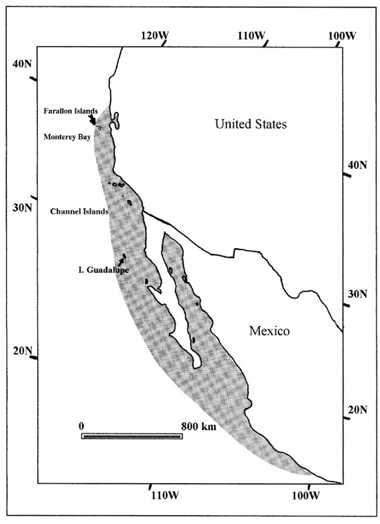 Geographic distribution of Guadalupe fur seal