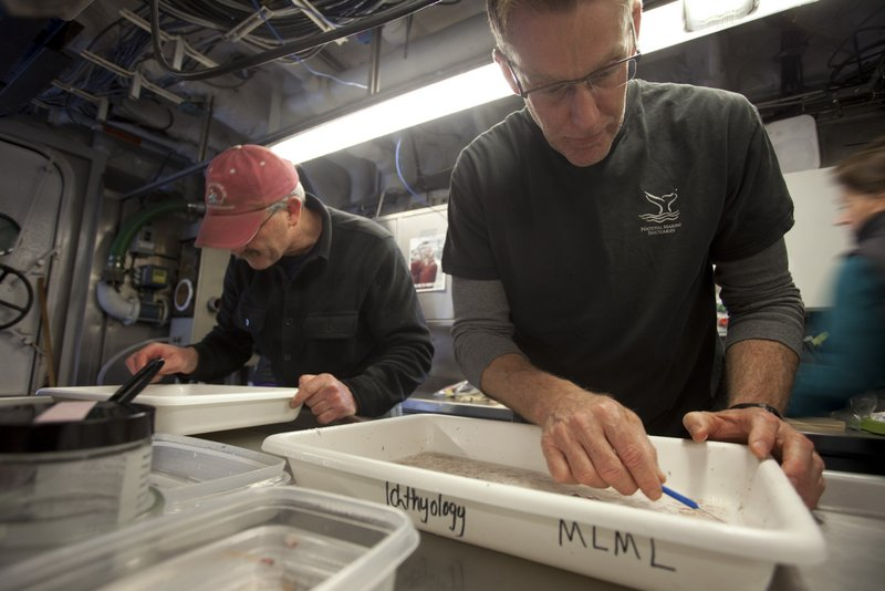 Dr. Jim Brennan (left) and Paul Michel sort fishes from a soup of organisms that were trawled up from the deep scattering layer. (photo by Chad King)