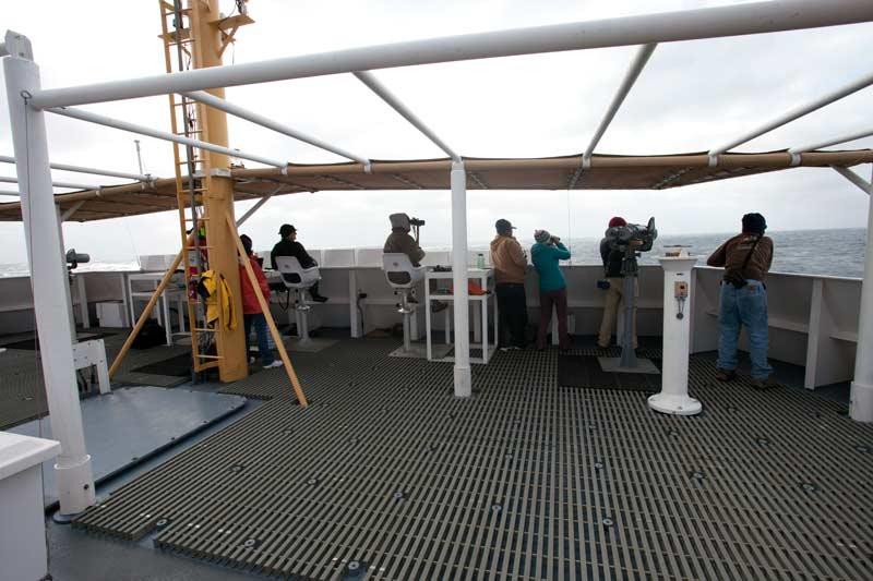 Marine mammal and seabird observers conducting a survey from the Shimada's flying bridge. (photo: Chad King)