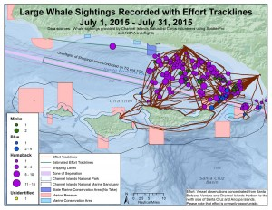 Whale sightings map for July combining sightings from SpotterPro app, WhaleAlert app, paper data sheets, and NOAA overflights along with effort tracklines.