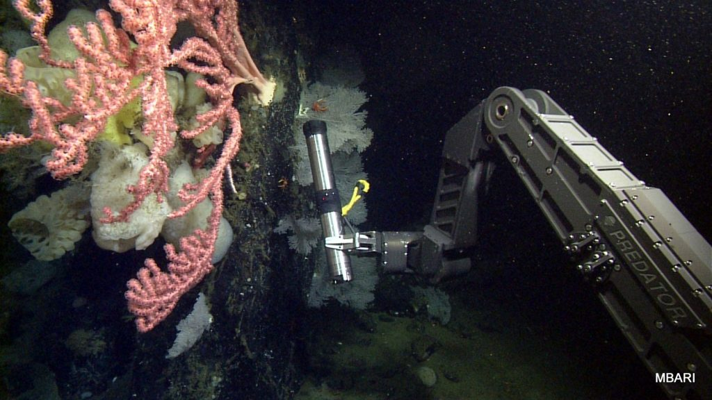 "The manipulator arm of the ROV ""Doc Ricketts"" holds an ADCP to measure currents near a bubblegum coral."