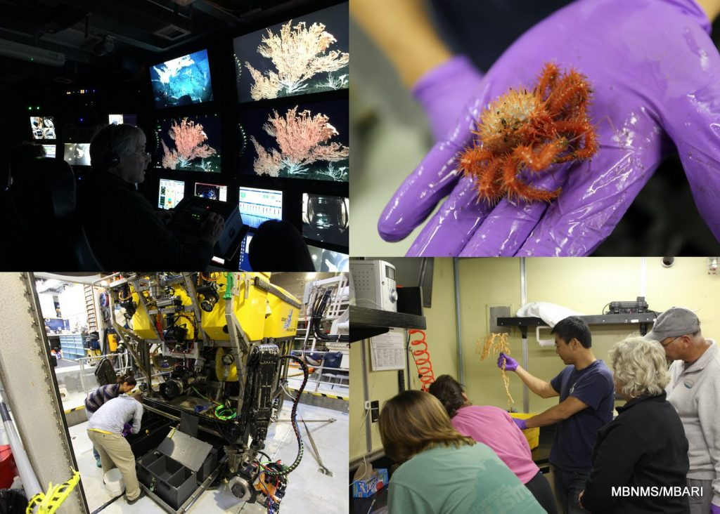 upper left: Dr. Jim Barry (MBARI) controls the main HD camera from the science chair; lower left: science crew retrieve biological samples from the biobox on the ROV Doc Ricketts shortly after today's dive; upper right: science crew member holding the crab Neolithoides diomedae; lower right: science crew processes samples as Dr. Charlie Boch inspects a bamboo coral that we would observe bioluminesce later.