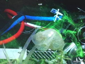 Fluorescent green dye circulating around a stalked tunicate. The laser and camera apparatus can be seen in the background.