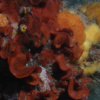 New study on introduced species in Monterey Bay
